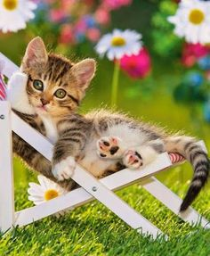 Cool Cats Having The Purr-Fect Summer Kittens And Puppies, Cute Cats And Kittens, I Love Cats, Crazy Cats, Cool Cats, Kittens Cutest, Beautiful Cats, Animals Beautiful, Cute Animals