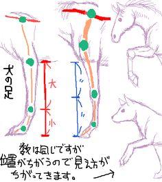 馬の前足動作を犬と比べた場合