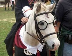 Horsey Potter :)