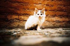 Moroccoan Stray kitten