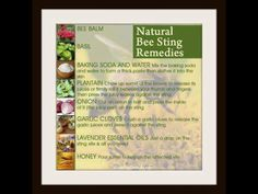 Natural Bee Sting Remedies