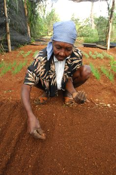 A woman plants seeds to grow food in #Haiti.