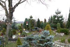 Park, Snow, Plants, Outdoor, Pictures, Photograph Album, Outdoors, Parks, Plant