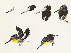 Le martin-pêcheur en peinture chinoise xieyi                                                                                                                                                                                 Plus