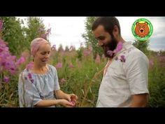 """Копорский чай без мясорубки: от """"А"""" до """"Я"""". (Russian tea). - YouTube"""