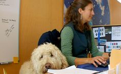 At the Ibex outdoor clothing company in Vermont, bringing your dog to work has been office policy for the last decade.