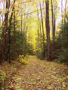 :: Smoky Mountain Fall Trail Running. I want to run through places like this!!