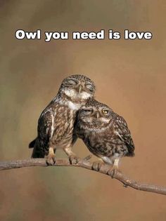 """Owls mate for life and become emotionally attached to their partner.  They cuddle in their nest together and will """"mate"""" to be together not necessarily procreating."""