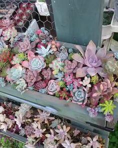 Succulent Landscaping, Succulent Gardening, Landscaping Plants, Cacti And Succulents, Planting Succulents, Planting Flowers, Small Flower Gardens, Bonsai Plants, Flowers Perennials