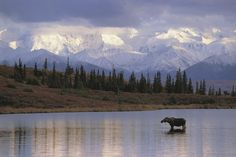 Denali Star from Anchorage to Fairbanks | 7 Epic Train Journeys To Take Before You Die