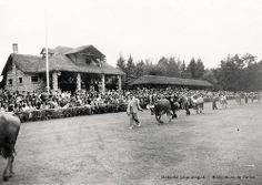 Ganadu lehiaketa Faduran. Abelburuen desfilea epaimahairen aurrean / Concurso de ganado en Fadura, 1950. Desfile de reses ante el jurado (ref. 00475)