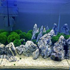 53 best aquascaping images aquascaping planted aquarium aquarium