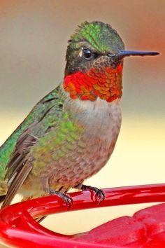 Hummingbirds at the feeder - this looks just like the one at our feeder!