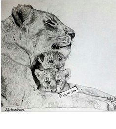 beautiful sketch of lioness and her cubs, I would put 3 or maybe 4 cubs?!!