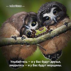 09:00 Радость (Поделитесь с друзьями). Улыбайтесь! Хорошего дня!  (фото — instagram.com/animalplanet_fan) #радость, #жизнь, #счастье, #tbworker