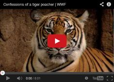 Endangered TV – Promoting the Plight of Endangered Species and the Efforts to Save Them