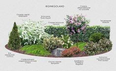 Ландшафтный дизайн только с любовью – 8 идей садовых композиций | Идеи дизайна (Огород.ru) Backyard Plants, Landscape Design, Garden Deco, Ornamental Grasses, Flower Garden Layouts, Plant Decor, Garden Planning, Garden Design, Creative Landscape