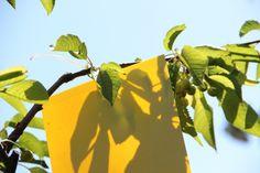 Vihartól, fagytól sérültek a növényeink. Már napok óta párában állnak a kertek, a gombák és a baktériumok legnagyobb örömére.... Májusi teendők