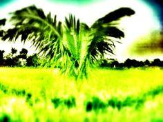 Embossed green
