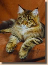 GC, NW, McKITTYCREEK T RUXPIN OF SHUBACOONS  CFA's 7th Best Kitten Brown Tabby and White, Male  Breeder: Bill & Sue Storten  Owner: Paul & Ramona Shuba & Sue Storten