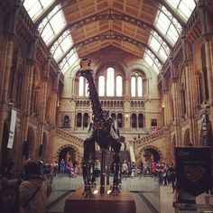 Natural history museum history museum, science museum, and art Space Gallery, Art Gallery, Free Museums, Natural History Museum, London Museums, Maritime Museum, Science Museum, Greater London, British Isles