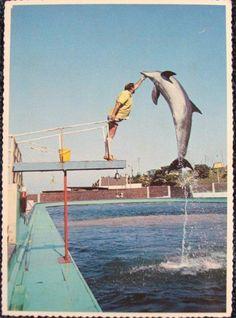 Oceanarium Port Elizabeth