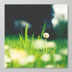 """Just one"" greenery, color 2017, field, flpwers, grasses, art prints by Galerie Artefctum"