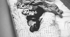 Happy #LazySunday everybody! Lazy Sunday, Happy, Quotes, Quotations, Ser Feliz, Happiness, Quote, Manager Quotes, Qoutes