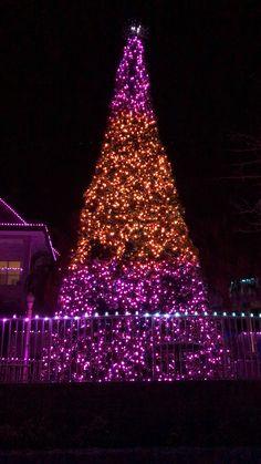 Christmas Tree Gif, Christmas Light Show, Merry Christmas Pictures, Christmas Scenery, Christmas Light Displays, Christmas House Lights, Christmas Music, Christmas Greetings, Christmas Light Installation