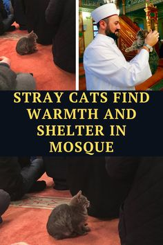 Istanbul, Turkey, is known for its huge stray cat population. These cats roam the city's streets freely and the cats even randomly nap whenever they feel like it!