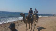 L'escursione Cammellata Sharm Cena Beduina Sharm El Sheikh.Godete vi la passeggiata a cammello, un giro nel deserto sul dorso di cammelli (dromedari) che generalmente finisce a un villaggio beduino dove viene offerto il tè, il pane tipico e La Cena Beduina. http://www.italian.book-tour-egypt.com/show.php?bsort=Sharm%20El%20Sheikh%20%20%20%20%20%20%20%20%20%20%20%20%20%20%20%20%20&subsort=Escursioni%20Safari%20Sharm%20%20%20%20&page=Cammellata%20Sharm%20Cena%20Beduina%20&trip=show