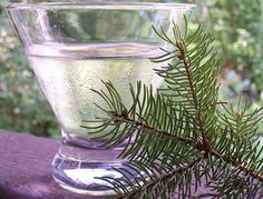 Gojee - Spruce Martini by Jacob Grier