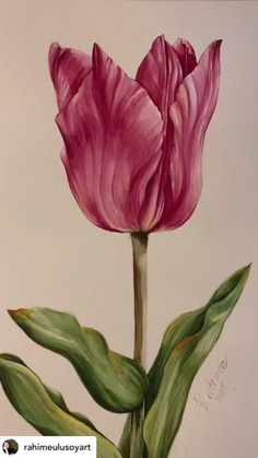 Tulip Painting, Painting Flowers, Watercolor Flowers, Carnation Drawing, Flower Art Drawing, Watercolor Art Lessons, Watercolor Images, Indian Art Paintings, Plant Art