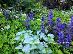 Companion Plants - traditional - landscape - newark - Summerset Gardens/Joe Weuste