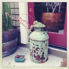 Succulent hen and chicken vintage milk can