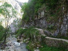 Posts about turda gorge canyon trascau carpathian mountains transylvania written by Carpathian Mountains, Romania, Waterfall, Country Roads, River, Plants, Outdoor, Outdoors, Planters