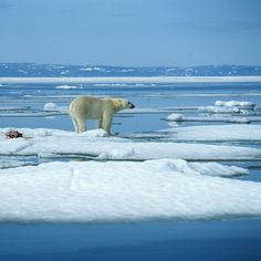 This is the website for the Environmental Defense Fund explaining the impacts of climate change on our earth and its inhabitants. #EnvironmentalDefenseFund #ImpactsOfClimate #EarthsChanging
