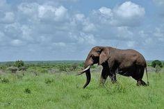 Kruger National Park South Africa - I love elephants