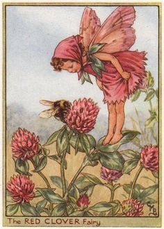 FLOWER FAIRIES/BOTANICALS: The Red Clover Fairy; This is an original vintage Cicely Mary Barker Flower fairies colour print. It is not a modern reproduction, c1948; approximate size 11.0 x 7.5cm, 4.25 x 3 inches