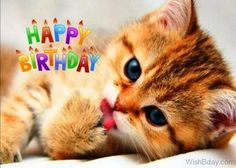 Happy Birthday with kitten and flowers (pink-red roses)- Happy Birthday pictures, images, pics. Happy Birthday Little Girl, Happy Birthday Cupcakes, Happy Birthday Wishes Quotes, Happy Birthday My Love, Happy Birthday Flower, Happy Birthday Candles, Happy Birthday Greetings, Birthday Quotes, Birthday Cartoon