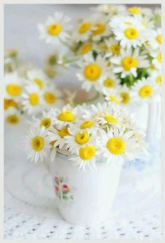 daisy in teacup Little Flowers, My Flower, Happy Flowers, Beautiful Flowers, Bouquet Champetre, Daisy Hill, Daisy Love, Daisy Daisy, Arte Floral