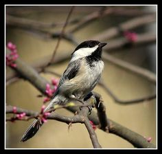 Hang a bird-feeder and you will be sure to have wonderful birds visiting your garden!