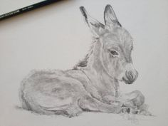 My cute lil ass! I donated this donkey foal drawing to The Donkey Sanctuary, Ireland. I figured they might come up with a less innuendo-ridden title than me! Tony O'Connor whitetreestudio.ie