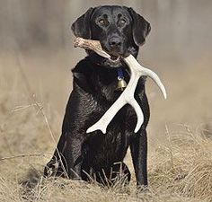 Train your dog to be a Shed Hunter. Tips to try with our new puppy.
