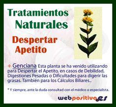 #SaludNatural Tratamiento Natural con #Plantas para Despertar el Apetito, tener más hambre cuando se está falto de energía http://webpositiva.es/org/blog/2013/abrir-apetito-tratamientos-naturales