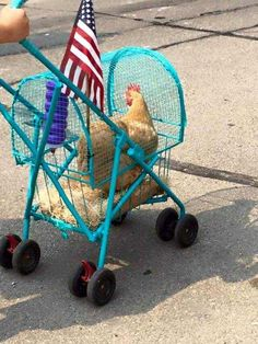 Pet Stroller: Perfect for dogs, cats, rabbits, even for chickens! - All About Gardens Cute Chickens, Keeping Chickens, Chickens And Roosters, Raising Chickens, Chickens Backyard, Bantam Chickens, Chicken Life, Chicken Humor, Chicken Names
