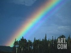 Rainbow over Forest, British Columbia, Canada Photographic Print by Nick Norman at Art.com