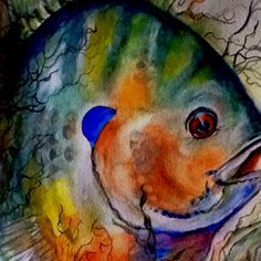 Blue gill watercolor Artist Brenda Griffis