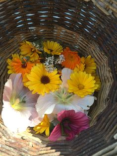 Sommerblüten: Ringelblume, Stockrose, Schafgarbe und Bechermalve Kraut, Plants, Painting, Marigold Flower, Medicinal Plants, Sheep, Organic Beauty, Florals, Painting Art