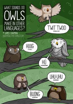 what sounds do owls make in other languages?